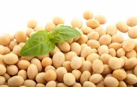 Ministrul Agriculturii vrea dezbatere la nivel national cu privire la cultivarea de soia modificata genetic