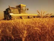 Clasificarea fermelor si exploatatiilor agricole din Romania se modifica