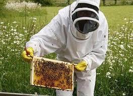 apicultor.jpeg
