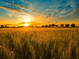 INS: Valoarea productiei agricole s-a ridicat la 78,4 miliarde lei in 2013