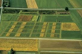 Guvernul ar putea aproba o ordonanta prin care se va da posibilitatea celor care vor sa cumpere teren agricol sa achite un avans de numai 10%