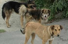 Curtea de Apel Bucuresti a suspendat normele de aplicare a legii care permite eutanasierea cainilor fara stapan