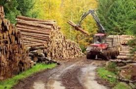 Ministerul Mediului a elaborat un proiect de act normativ pentru instituirea unui sistem informatic de urmarire a materialelor lemnoase de la recoltare pana la prelucrare