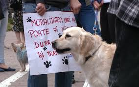 Proteste in Cluj si Bucuresti fata de eutanasierea cainilor